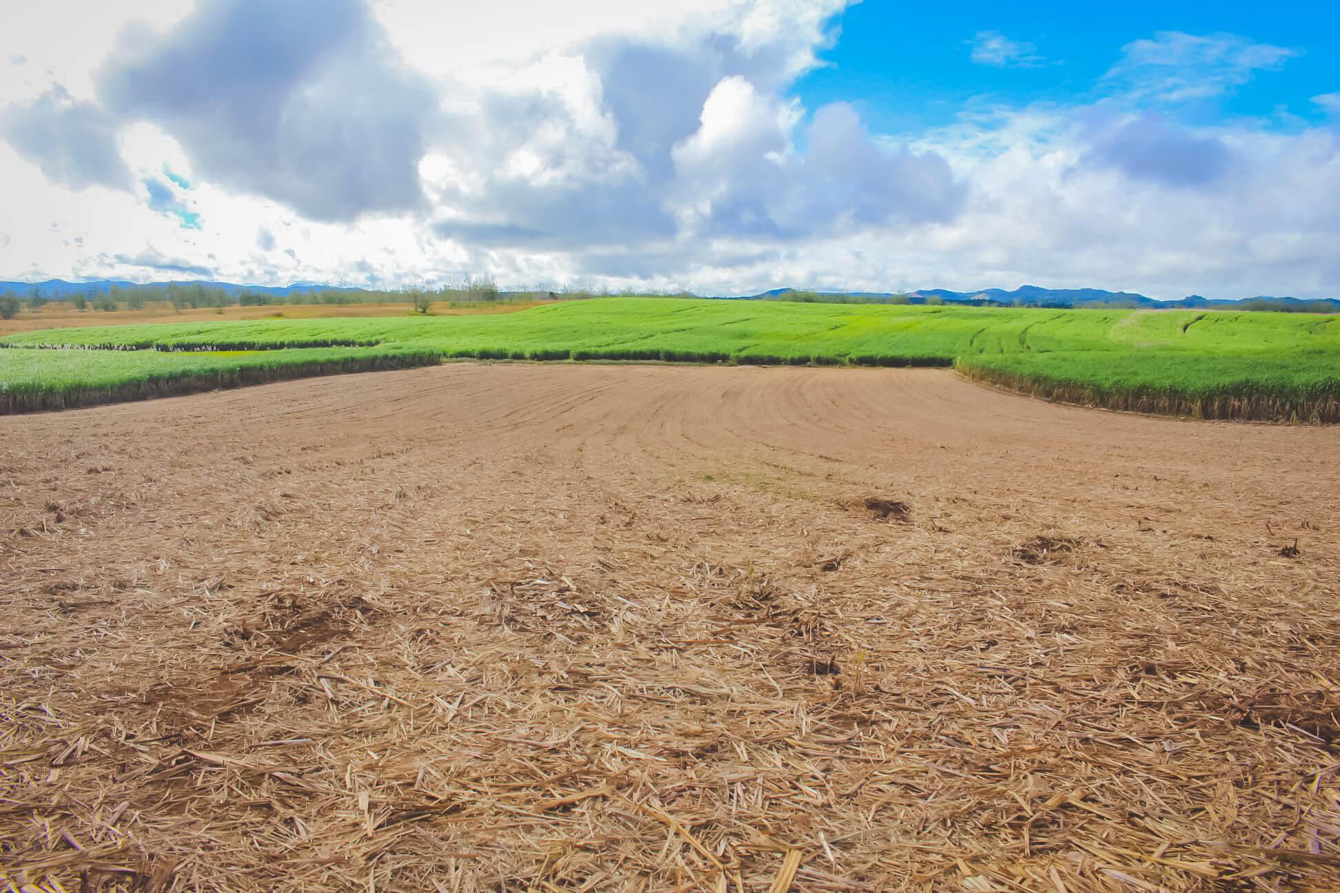 Sugar Cane Growers Fund