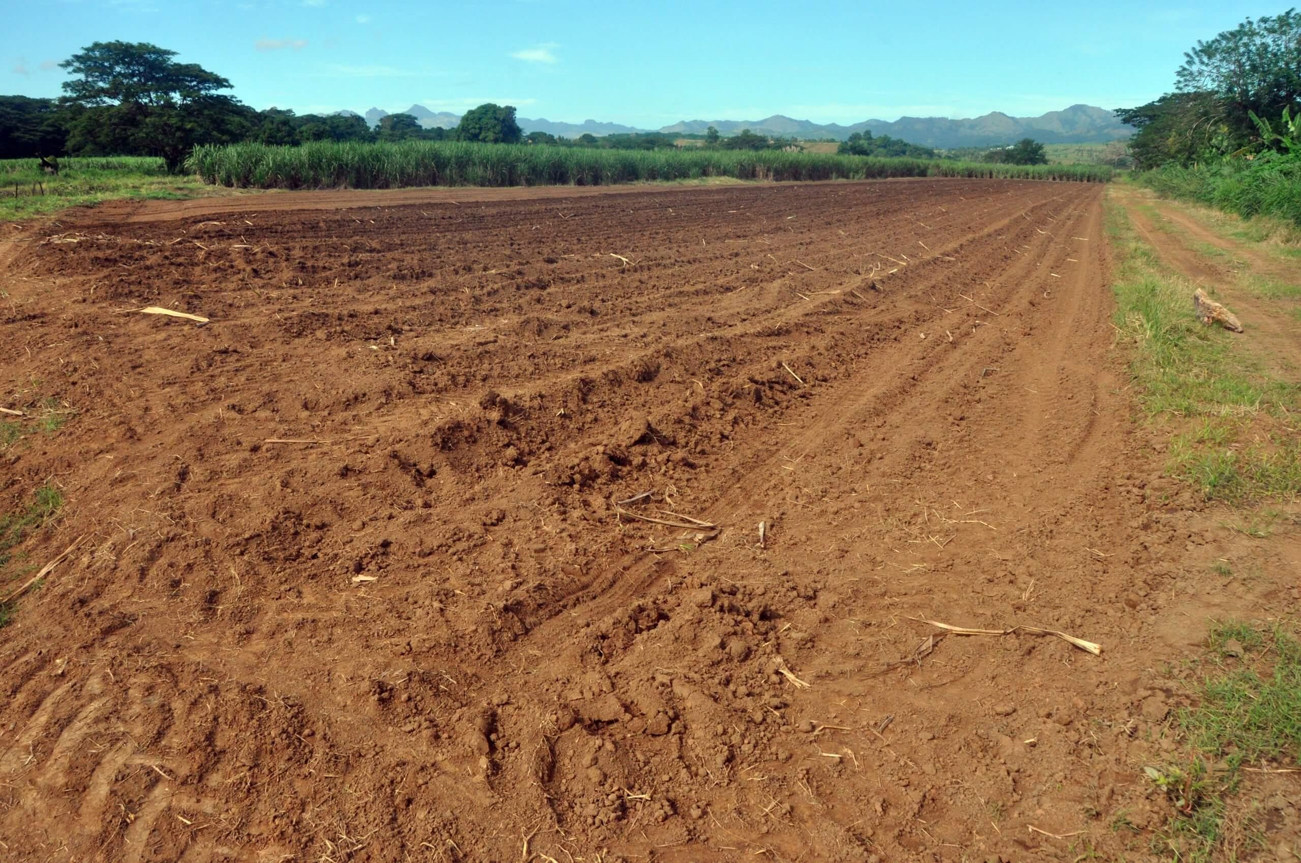Cane Development Planting Loan