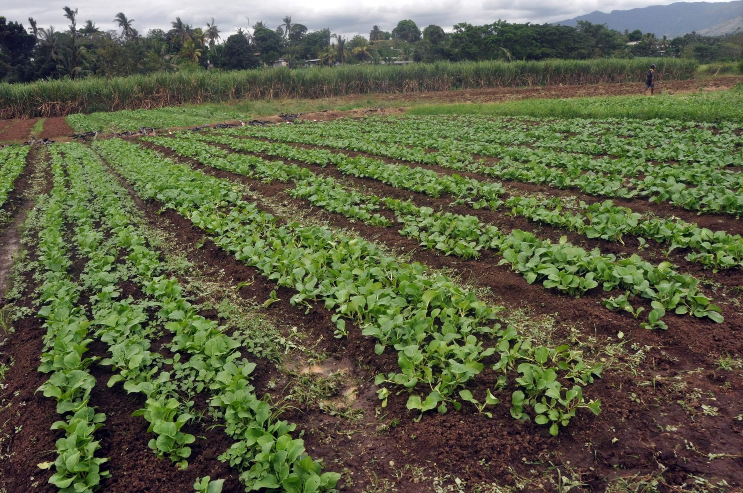 Subsistence Farming Loan