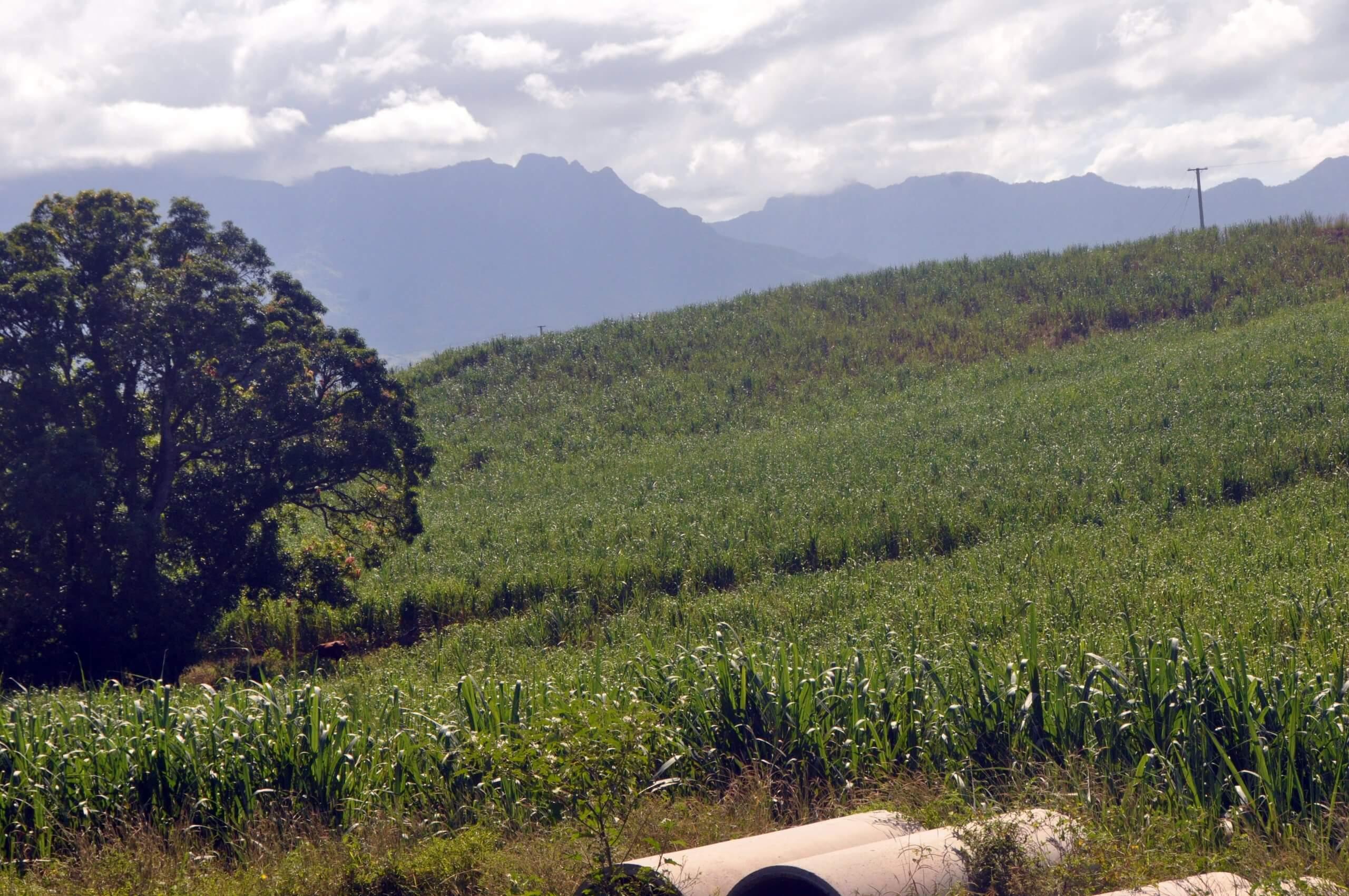 Sugar Cane Farm Purchase