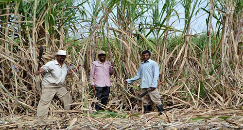 165 Cane Farmers Assisted Under Loan Package